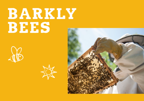 Barkly Bees